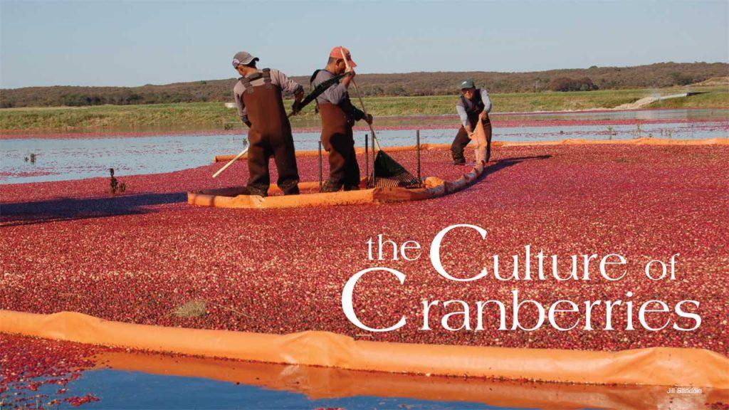nantucket cranberry bogs