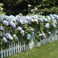 nantucket gardens and homes