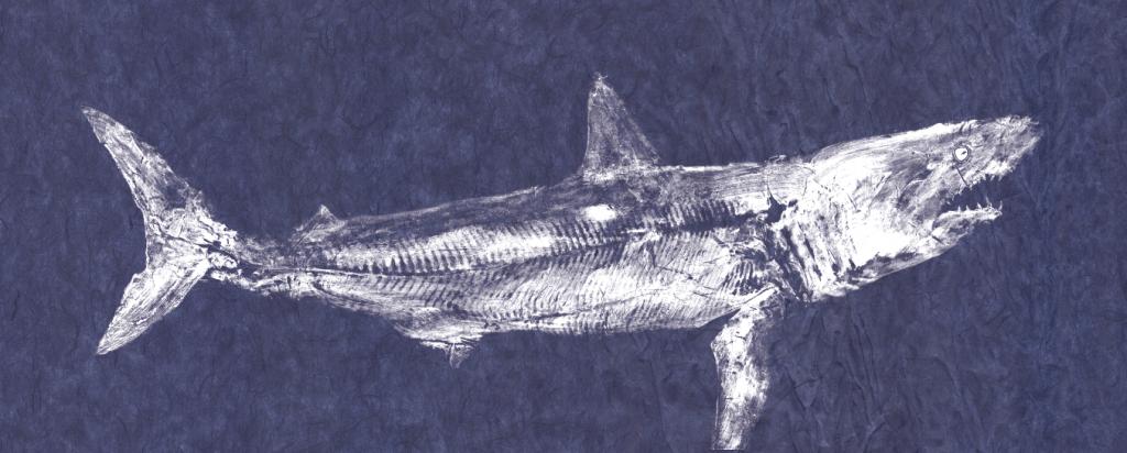 Fish prints art medium nantucket