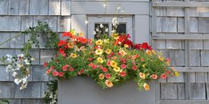 Window Box Tour and Demo with Fabrizia