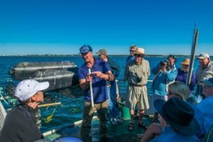 Oyster Farm & Harbor Tour with Nantucket Land Council
