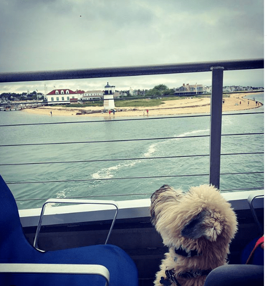 hyline cruises to nantucket dog photo