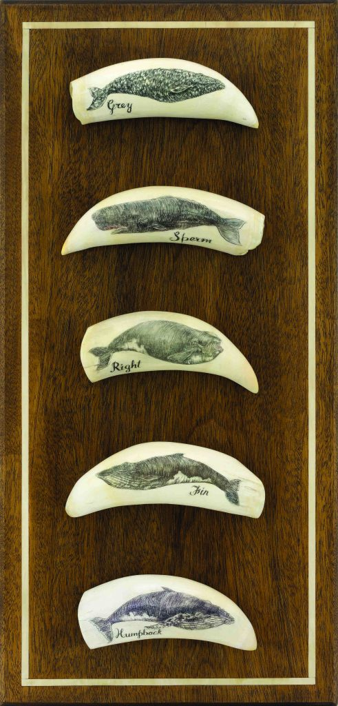 whale scrimshaw whale board art nantucket whaling