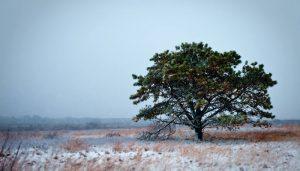 nantuket winter walking tour