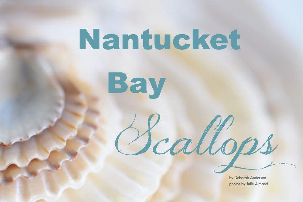 bay scallops nantucket