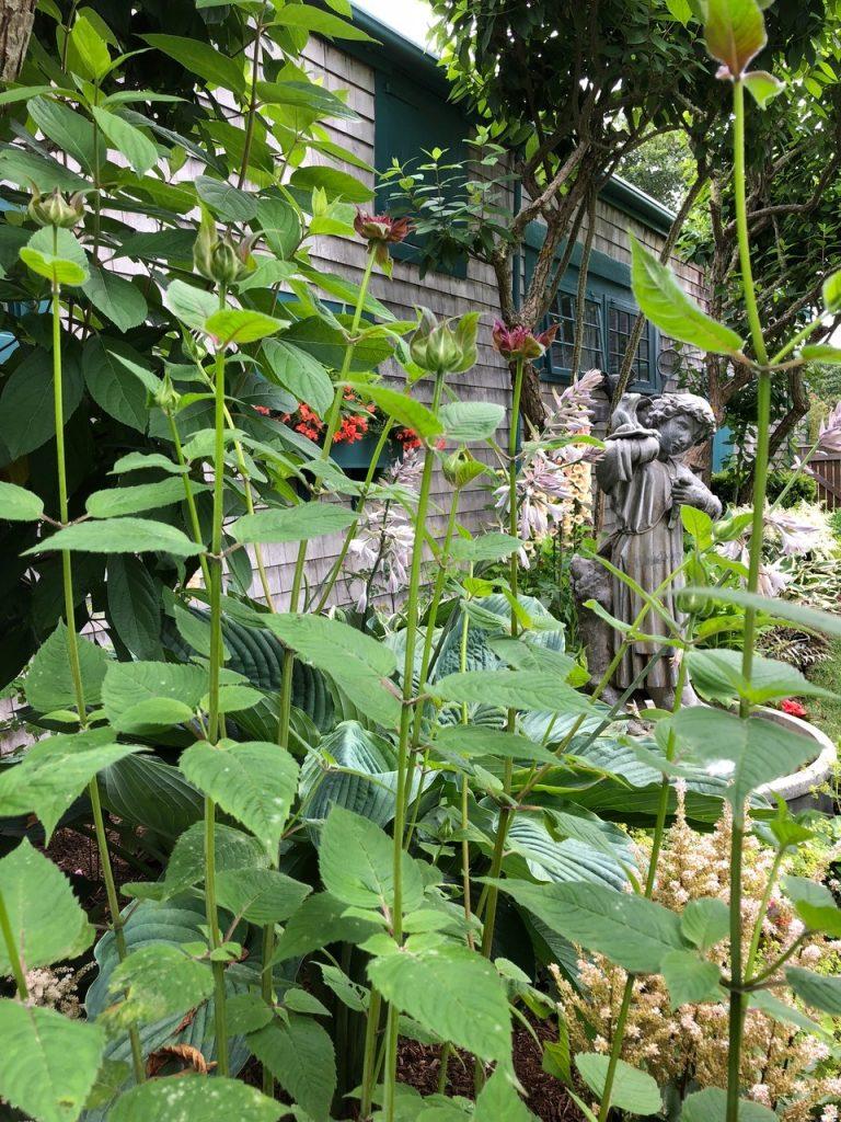 deborah wilson nantucket gardens
