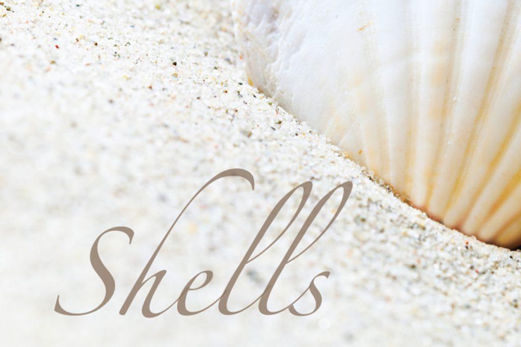 shell hunting on nantucket