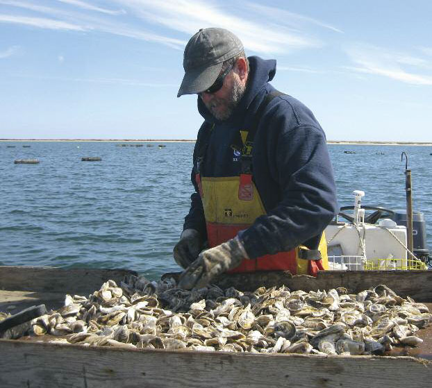 oyster farm nantucket