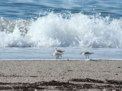 nantucket seagulls beach