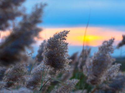 nantucket marsh grass sunrise