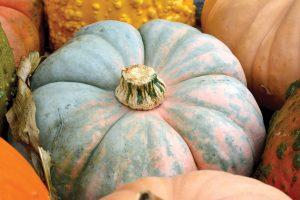 fall nantucket pumpkins
