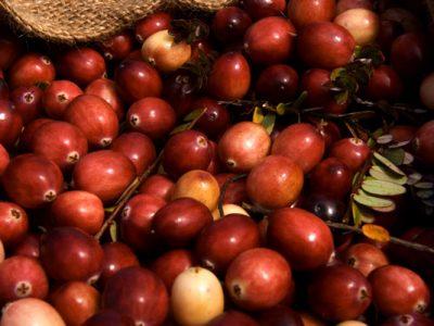 nantucket cranberries close up