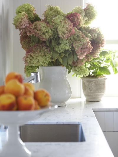 nantucket hydrangeas indoors