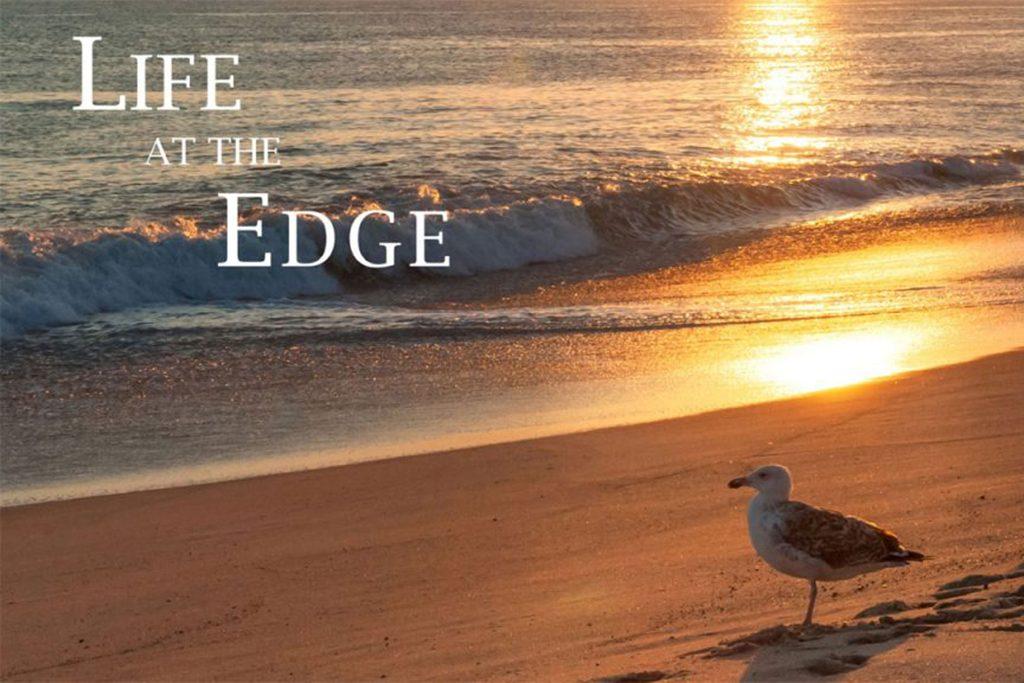 life on nantucket shore and beach